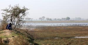 Bird watching near Delhi
